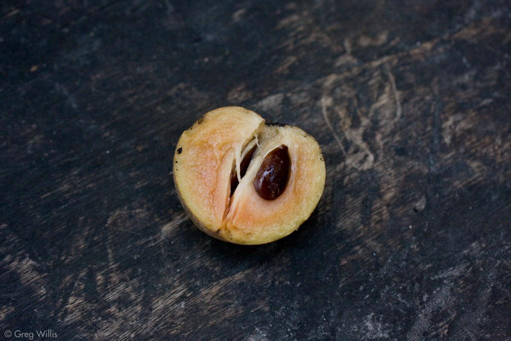 Chicozapote fruit