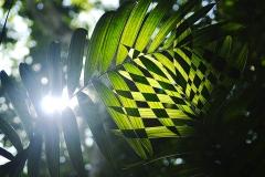 Sun light through the jungle at Petén