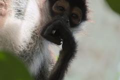 El Pensador versión Mono Araña, Tikal, Petén