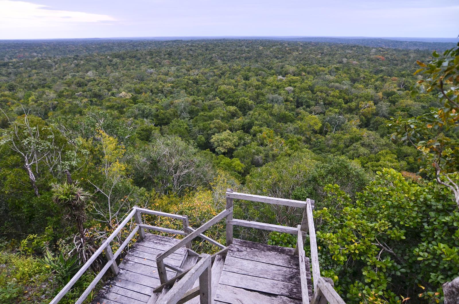 La Selva vista desde La Danta
