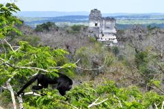 Saraguate at Tikal